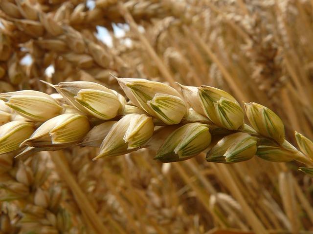 Healthy Breakfast - Whole Grains