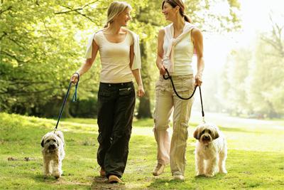 2 Women Walking Dogs