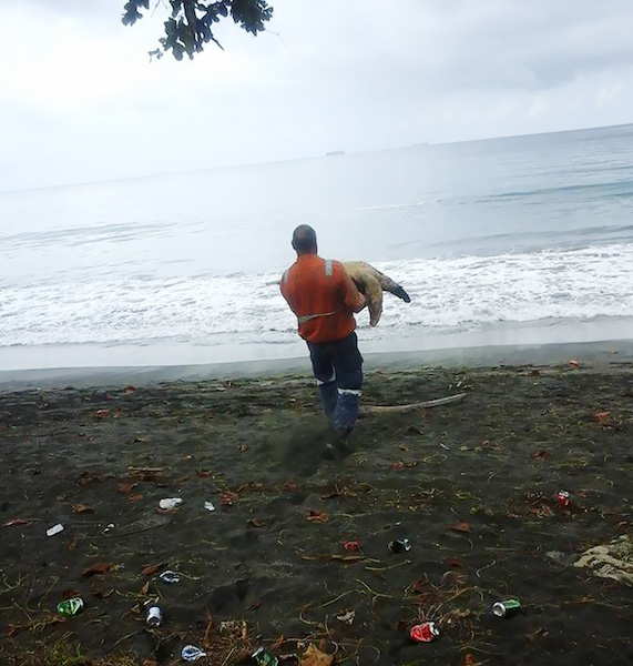 Man releasing turtle into the ocean
