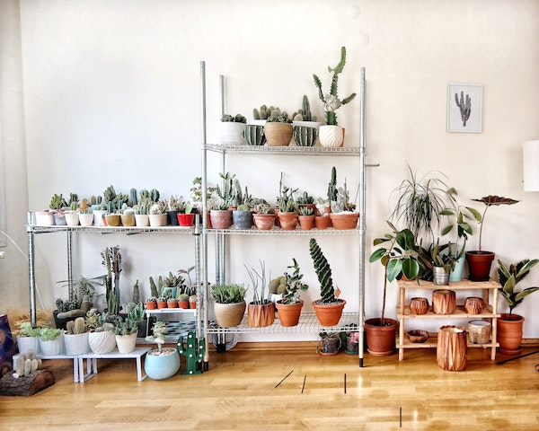 Wall of Various Indoor Plants